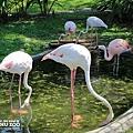 新竹動物園16