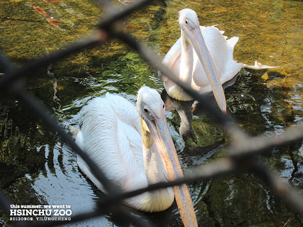 新竹動物園15