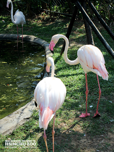 新竹動物園18
