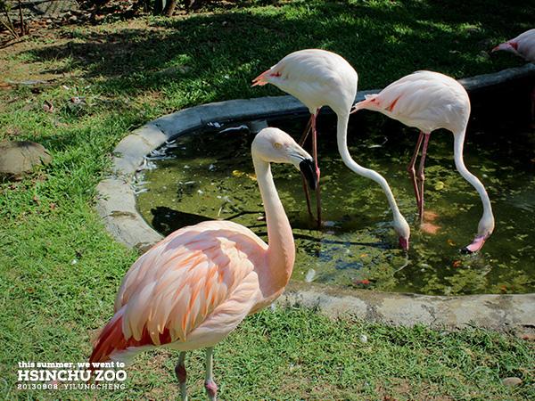 新竹動物園17