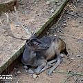 新竹動物園19