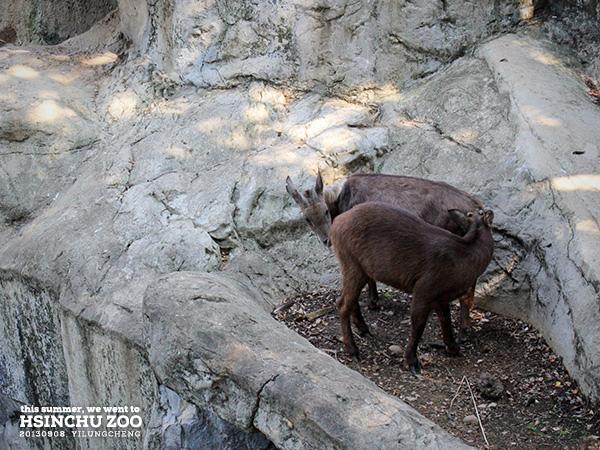 新竹動物園23