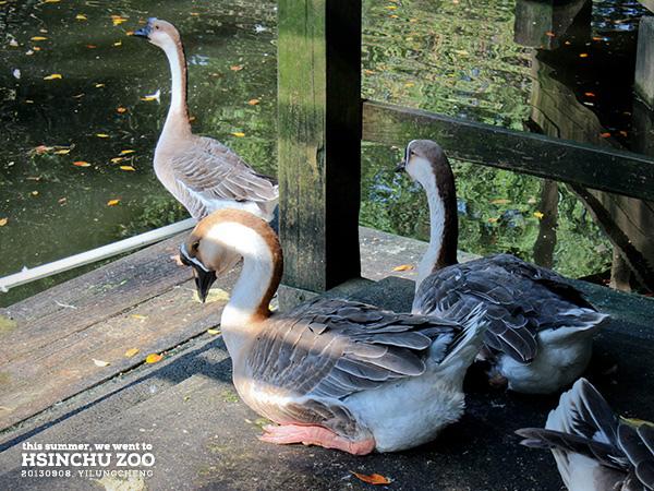 新竹動物園24