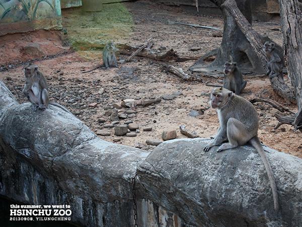 新竹動物園29