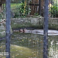 新竹動物園28