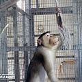 新竹動物園31
