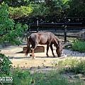新竹動物園32