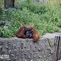 新竹動物園34