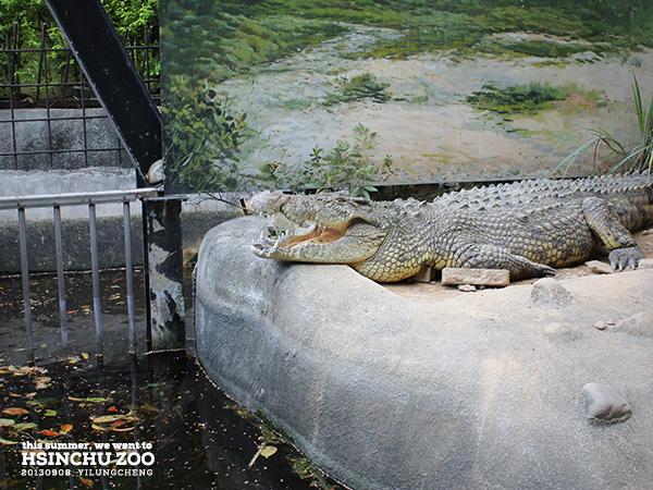 新竹動物園37