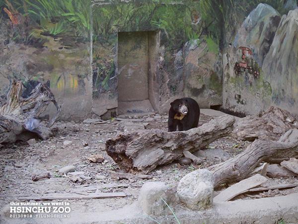 新竹動物園36