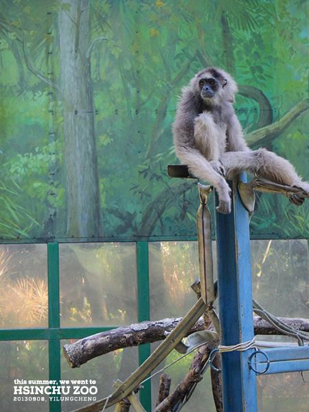 新竹動物園39