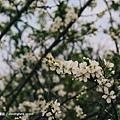 巧克力雲莊_07.jpg