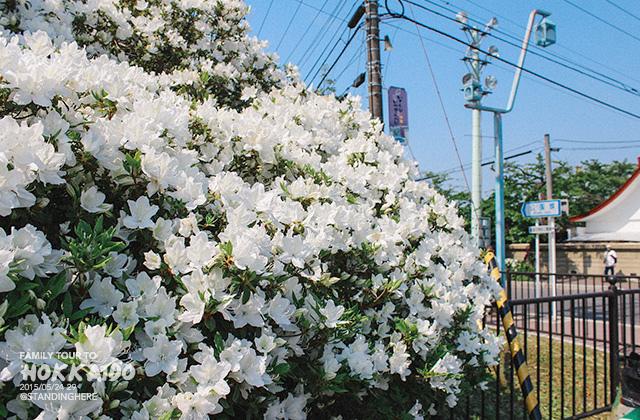 北海道-五稜郭-071