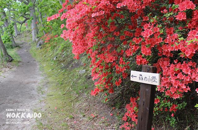 北海道-大沼國定公園-161