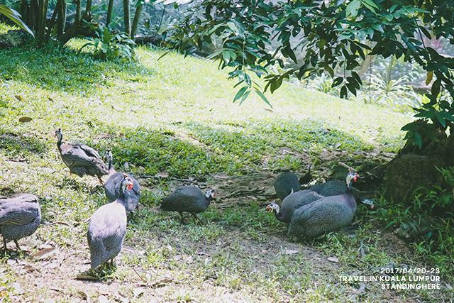 馬來西亞吉隆坡-669
