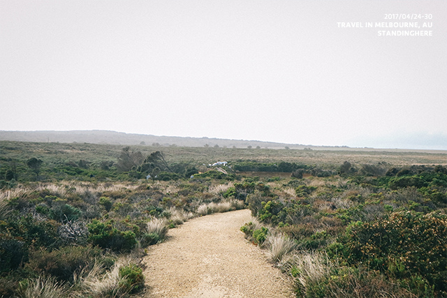 澳洲大洋路-2044
