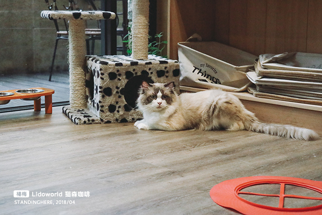楊梅-猫森-15