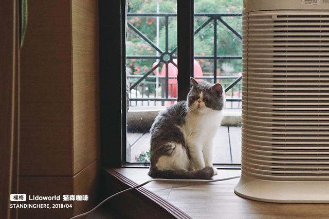 楊梅-猫森-18