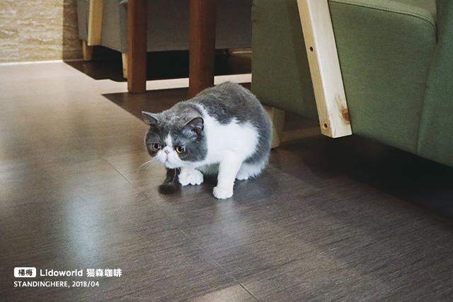 楊梅-猫森-19