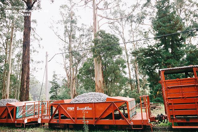 澳洲墨爾本-localtour-7020