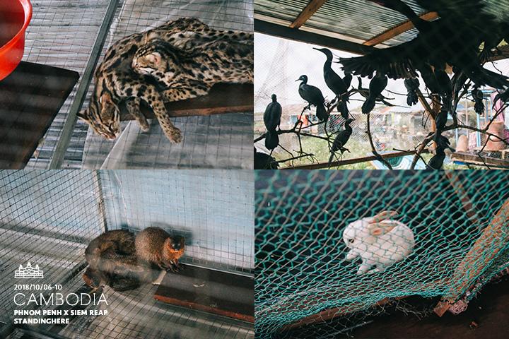 柬埔寨_暹粒_d2_26.jpg