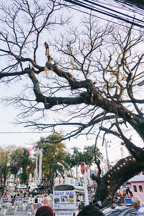 Cicada_market_868