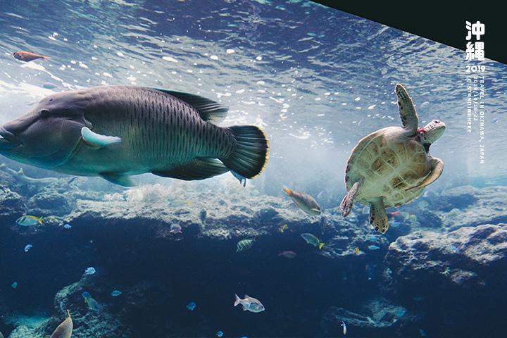 沖繩美麗海水族館-25