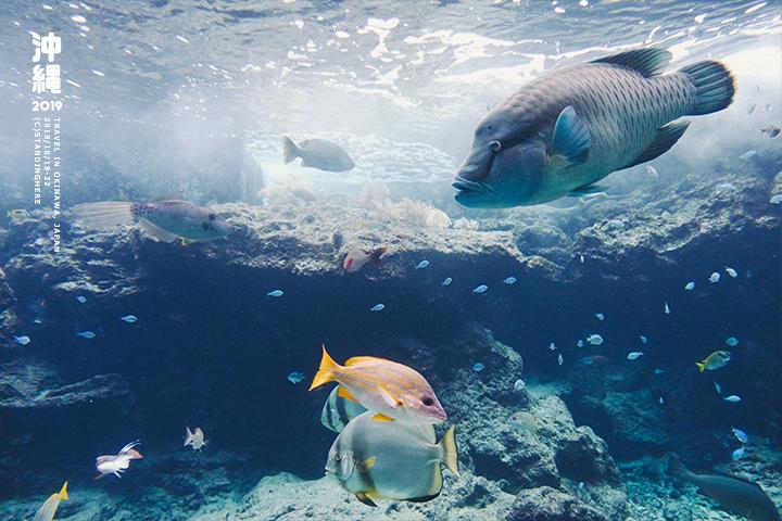 沖繩美麗海水族館-26