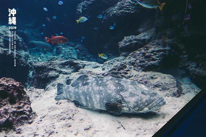 沖繩美麗海水族館-27