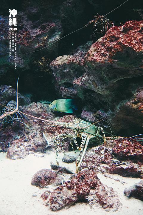 沖繩美麗海水族館-31
