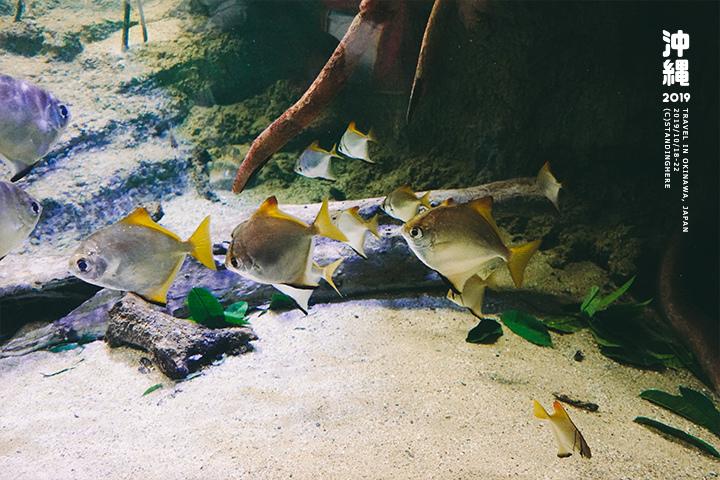沖繩美麗海水族館-32
