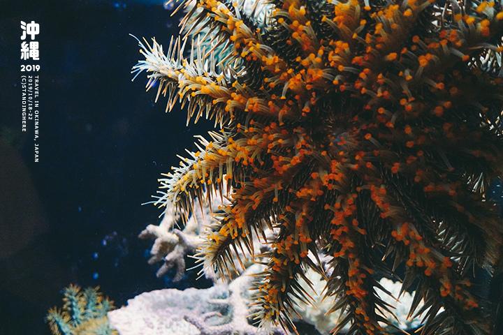 沖繩美麗海水族館-29