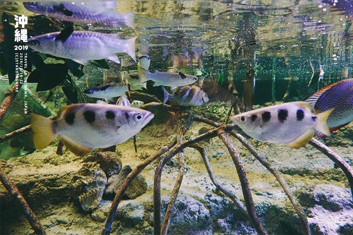 沖繩美麗海水族館-33