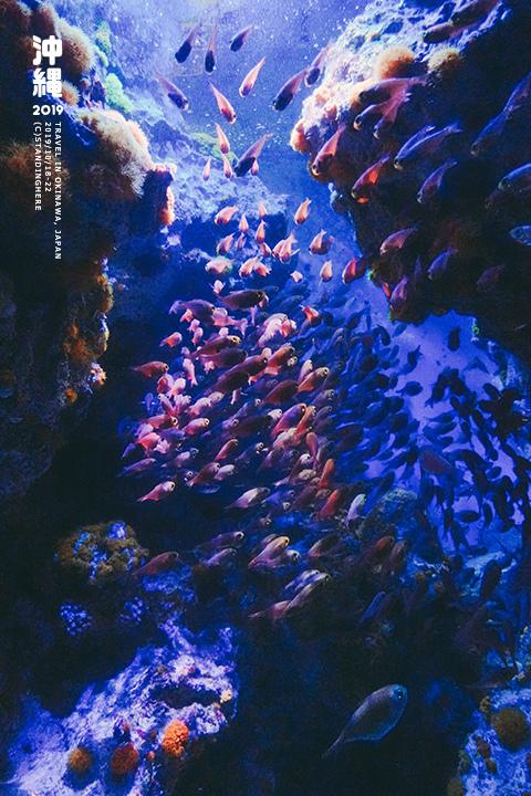 沖繩美麗海水族館-35