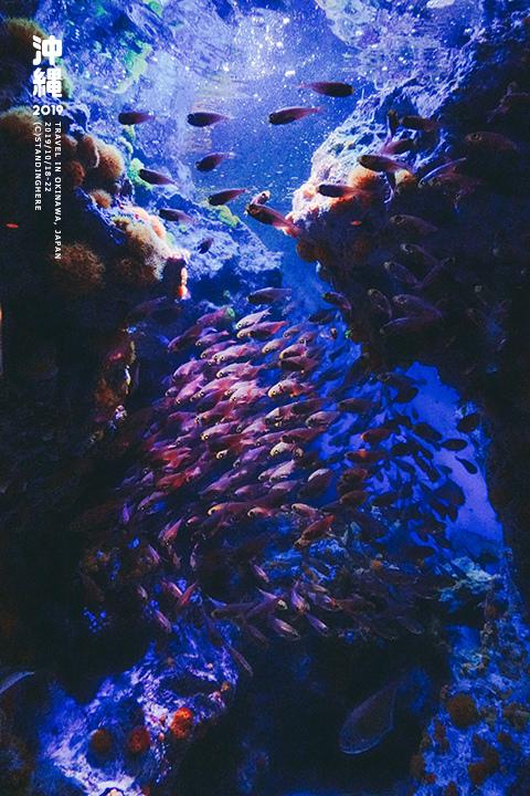 沖繩美麗海水族館-34