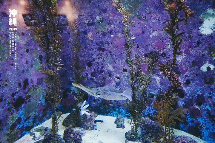 沖繩美麗海水族館-38