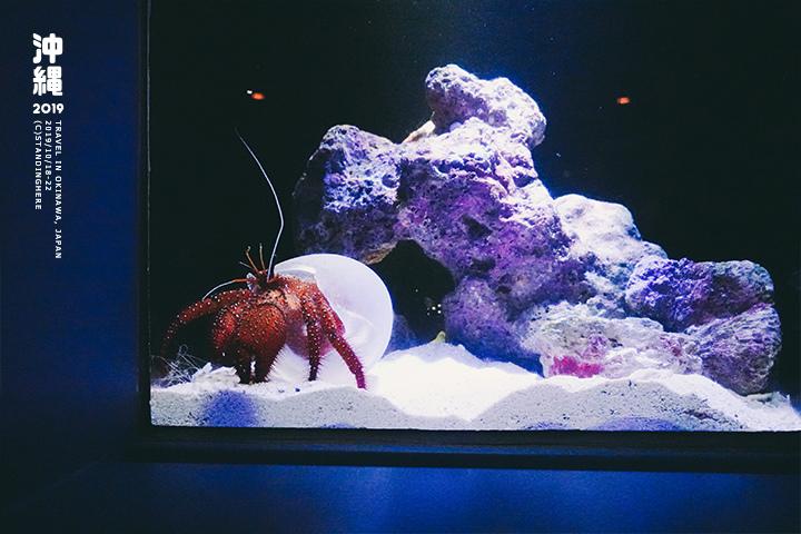 沖繩美麗海水族館-43