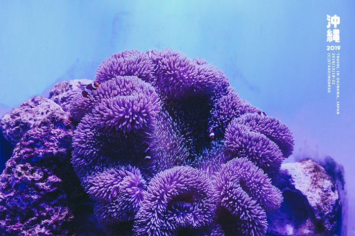 沖繩美麗海水族館-47