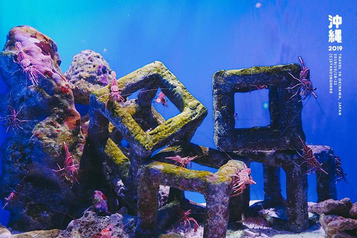 沖繩美麗海水族館-45