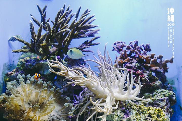 沖繩美麗海水族館-46