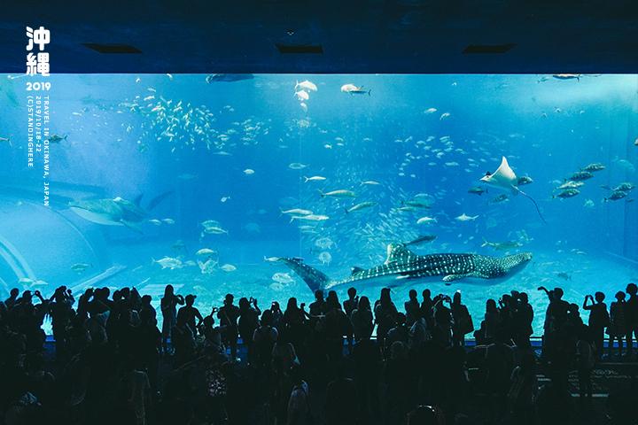 沖繩美麗海水族館-51
