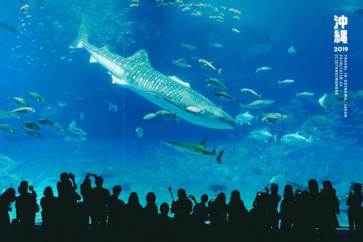 沖繩美麗海水族館-54
