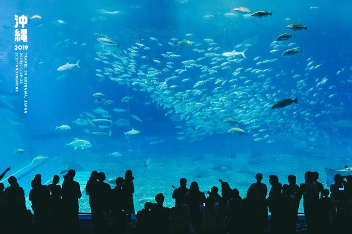 沖繩美麗海水族館-53