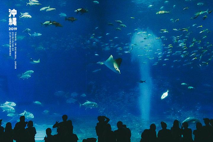 沖繩美麗海水族館-55
