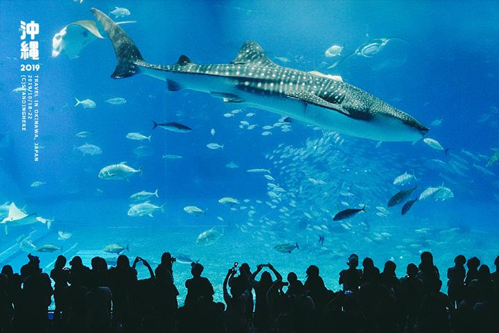 沖繩美麗海水族館-52