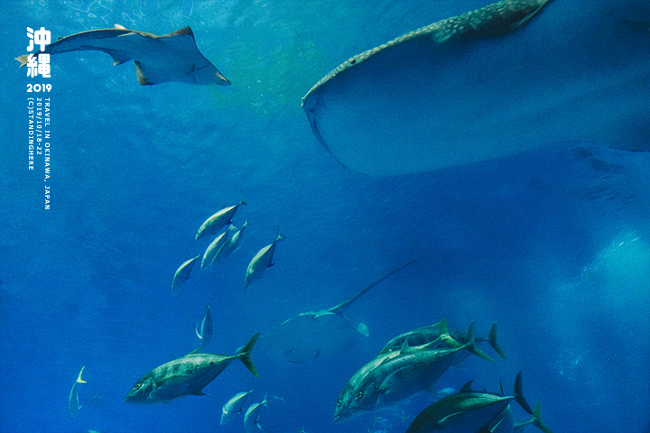 沖繩美麗海水族館-58