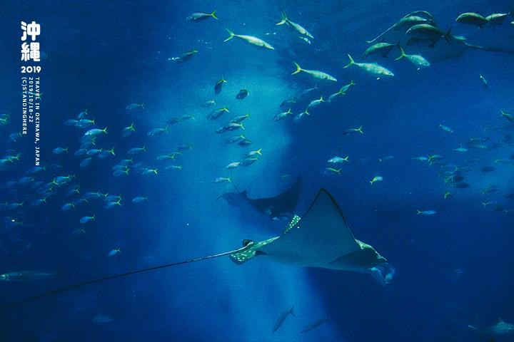 沖繩美麗海水族館-57