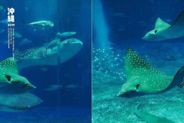 沖繩美麗海水族館-59