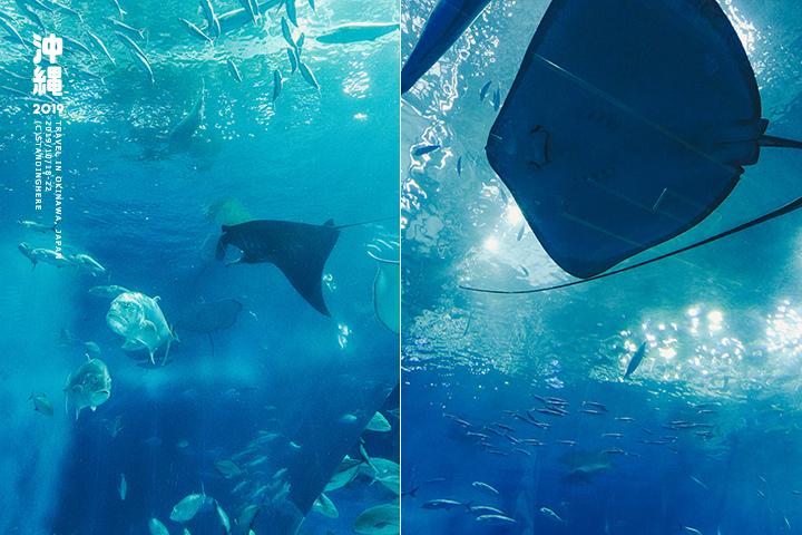 沖繩美麗海水族館-60