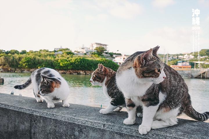 沖繩_浜邊的茶屋_奧武島_5-4-23